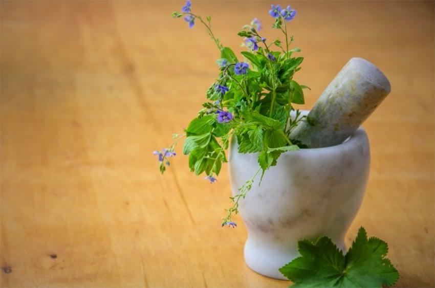 Le retour des plantes médicinales